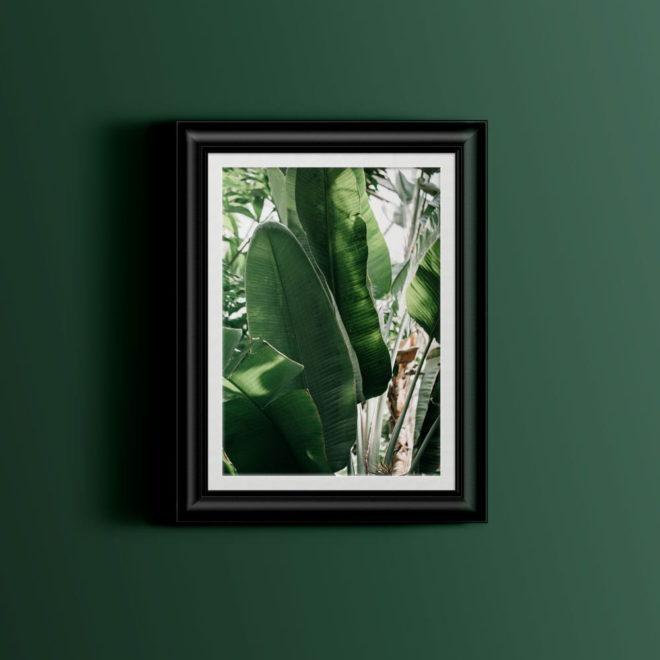 botanic-jungle-botaniczna