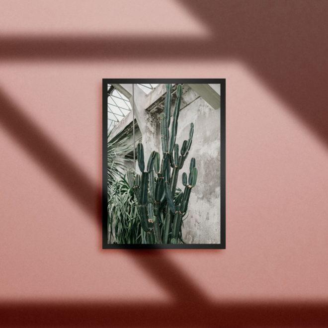 botanic-kaktusy