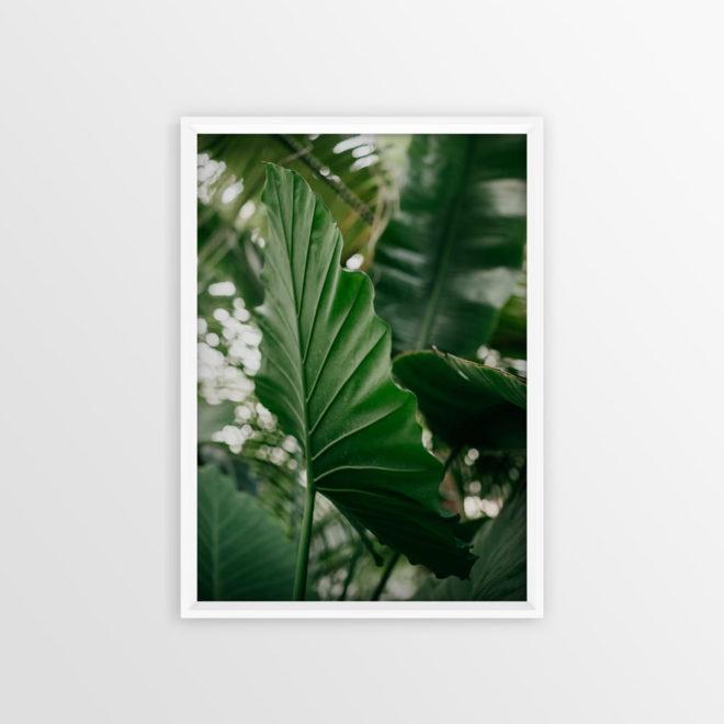 plakat-botaniczny-egzotyczny-lisc