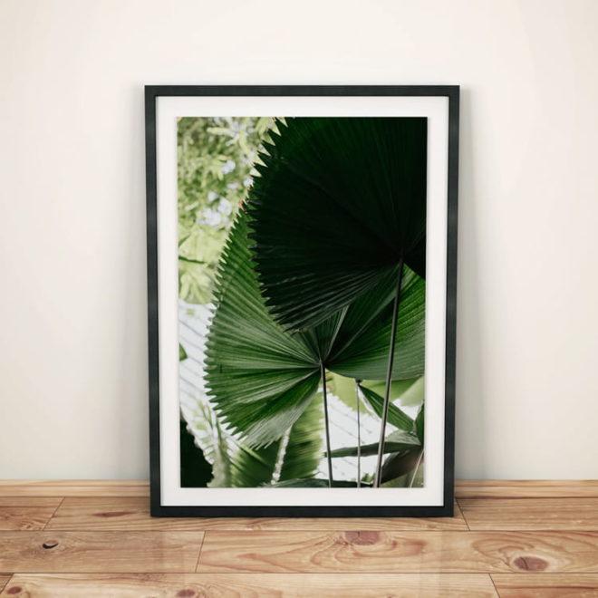 plakat-botaniczny-tropikalny1